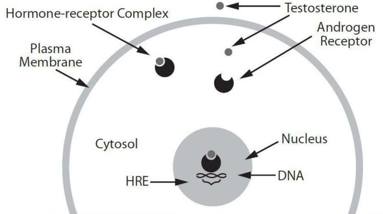 test-receptor