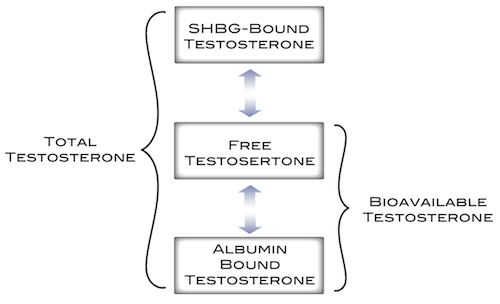 shbg-vs-free-testosterone1