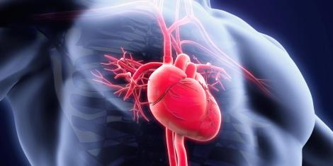 Cardiovascular Toxicity of Illicit Anabolic-Androgenic SteroidUse