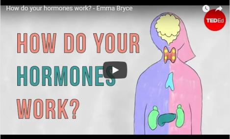 How do your hormoneswork?